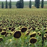 france-images-jo-ferris10