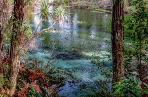 Redwoods and Rotorua – a Weekend Retreat